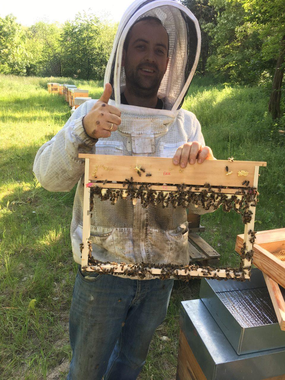 Stages d'initiation à l'apiculture dans le Vexin Ile de France