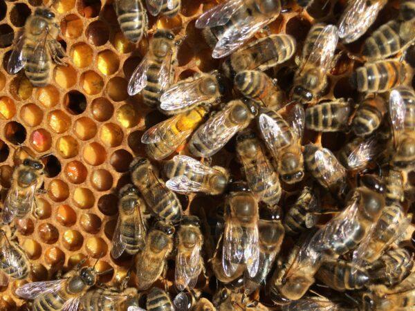 Location de kit miellerie pour extraction du miel