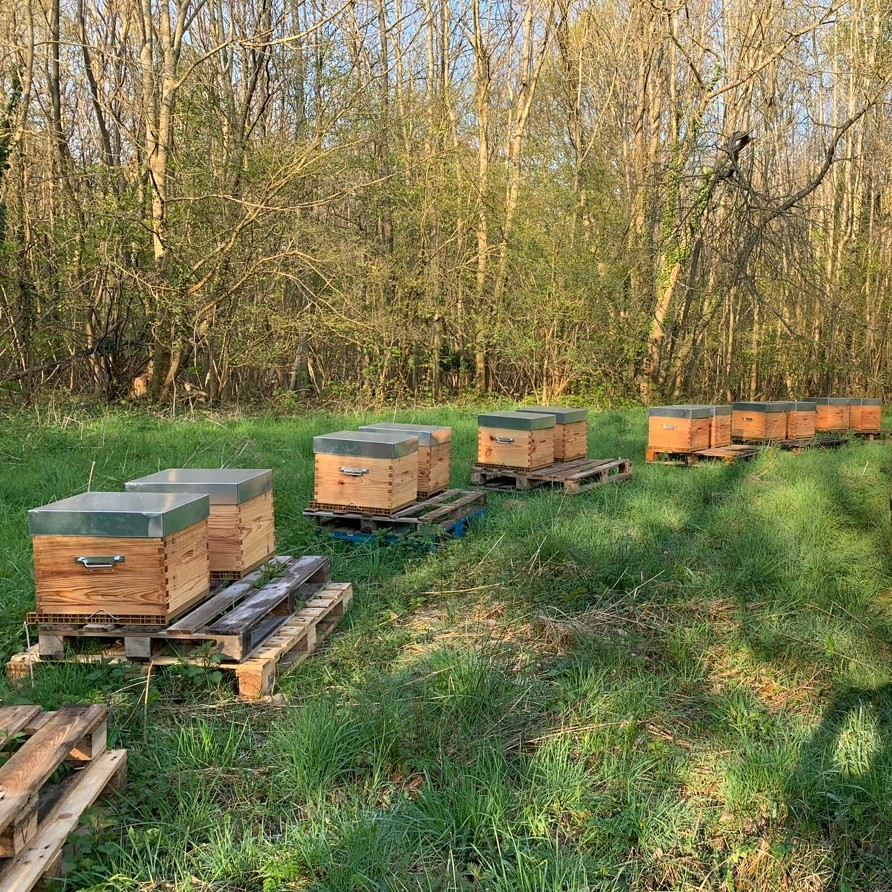Parrainage de ruches, apiculteur dans les Yvelines