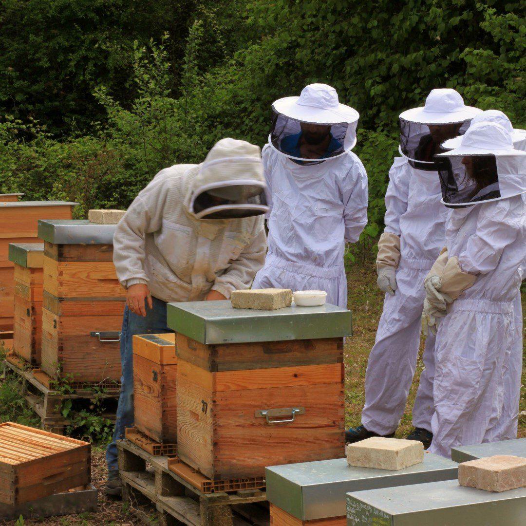 Stages d'initiation à l'apiculture par apiculteur professionnel